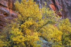 Zion In Autumn Royalty Free Stock Image