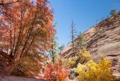 Zion Autumn Colors Stock Photo