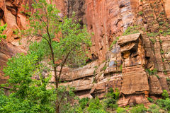 Zion Canyon Image stock