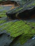 Zion Canyon Moss Royalty Free Stock Photo