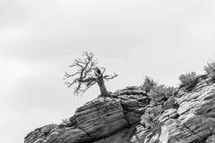 Zion Canyon National Park Utah Royalty Free Stock Photo