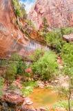 Zion Canyon National Park, Utah, de V.S. Stock Afbeeldingen