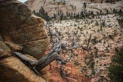 Zion Canyon obtenant près du point de débarquement du ` s d'ange Images stock