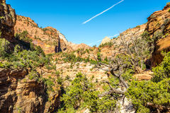 Zion - Canyon Overlook Trail Royalty Free Stock Photography