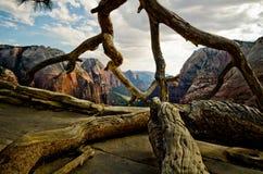 Zion Canyon som sett från änglar som landar på Zion National Park Arkivfoton