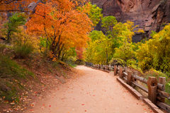 Zion Canyon Trail with Foliage Motion Blur. The Riverside Trail leading to the Narrows in Zion Canyon National Park, Utah Royalty Free Stock Images