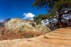 Zion Canyon and Tree Royalty Free Stock Photos