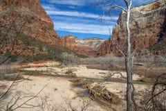 Zion Canyon, Utá após uma tempestade do inverno imagem de stock