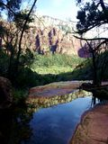 Zion Cliffs och trädsikt Arkivfoto
