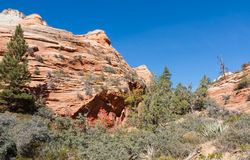 Zion Colors. Colorful rock, greenery, Fall colors all are present in this image from Zion National Park Royalty Free Stock Photography