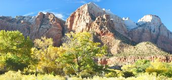 Zion Fall Color. Fall cottonwoods contrast with colorful Zion Canyon cliffs in late afternoon light, captured in autumn at Zion National Park in Utah Royalty Free Stock Image