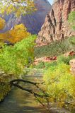Zion Fall Colors. Zions National Park Royalty Free Stock Image