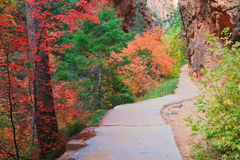 Zion Forest Path. Path through Refrigerator Canyon towards Angels Landing in Zion Canyon National Park, Utah Royalty Free Stock Images