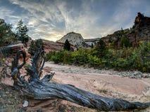 Zion getroffener Baum des Nationalparks Blitz Stockfotos