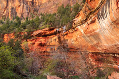 Zion Landscape Photos stock