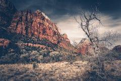 Zion Landscape crudo Fotos de archivo libres de regalías