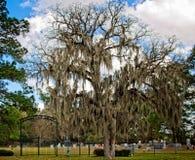 Zion Lutheran Cemetery Tree & porta Imagem de Stock Royalty Free