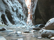 Zion Narrows. Zion Nartional Park Riverwalk in the Narrows Royalty Free Stock Photos