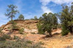 Zion National Park stock foto
