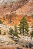 Zion National Park royalty-vrije stock afbeelding