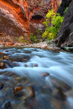 Zion National Park. Smooth cascades of the Virgin River flow through The Narrows of Zion Canyon in Utah Stock Images