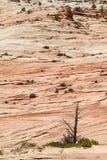 Zion National Park Imagens de Stock
