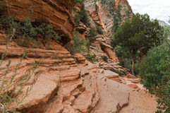 Zion National Park Photos libres de droits