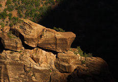 Zion national park. Detail of the bush in deep shadow Stock Photos