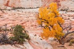 Zion National Park Autumn Scenic Imagens de Stock Royalty Free