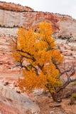 Zion National Park Autumn Stock Photo