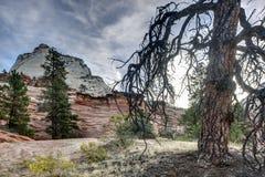 Zion National Park dead tree Stock Photos