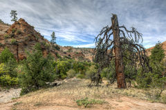 Zion National Park dead tree Stock Image