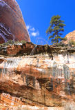 Zion National Park - Emerald Pools Trail Royalty Free Stock Photos