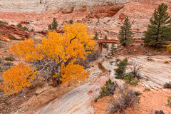 Zion National Park Fall  Landscape Stock Image