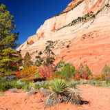 Zion National Park Geology Royalty Free Stock Photos