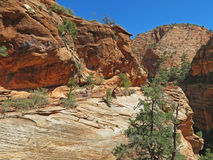 Zion National Park Hiker Stock Photography