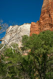 Zion national park landscape Royalty Free Stock Image
