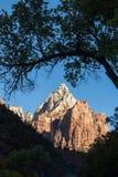 Zion National Park Landscape at Sunrise Stock Photography