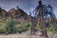 Zion National Park lignhtning struck tree Stock Image