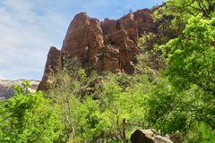 Zion National Park Lush Greenery stock foto's