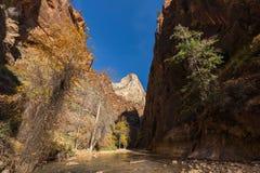 Zion National Park Narrows Landscape irregolare nella caduta fotografie stock