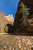Zion National Park Narrows Landscape nella caduta fotografia stock