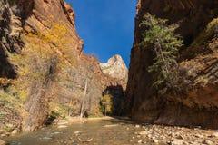 Zion National Park Narrows scenico nella caduta immagine stock libera da diritti