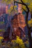 Zion National Park In nedgången, Utah Royaltyfri Foto