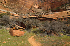 Zion National Park - Riverside Trail Stock Photo