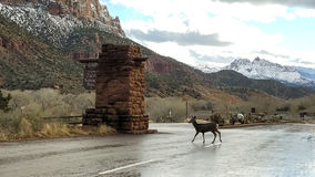 Zion National Park in Snow Royalty Free Stock Photography