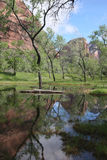 Zion National Park Standing water Royalty Free Stock Photos