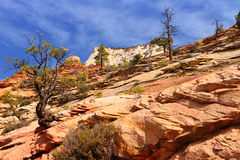 Zion National Park, USA. Royalty Free Stock Images