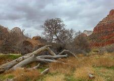 Zion National Park-Utah fotografia stock
