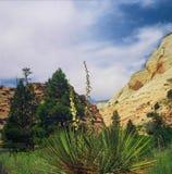 Zion National Park - Utah Arkivbild
